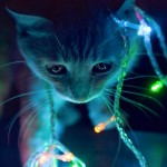 Proiect lumini de Craciun computerizate - Hobbytronica